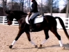 senna-dressage-work1-sm